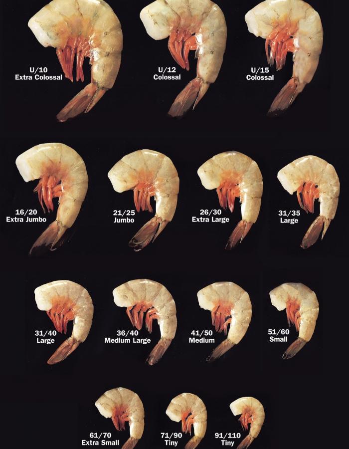 Camaron Larvas